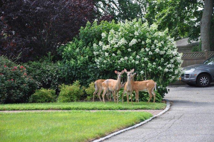 10 Best Deer Repellents To Keep Deer Out Of The Garden