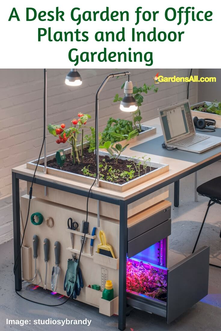 office gardening. Salad Days: Grow Your Own, At Work Office Gardening