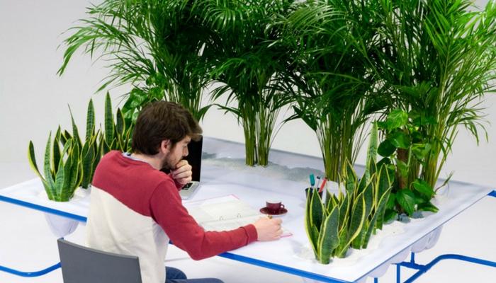 Tropical Desk Garden