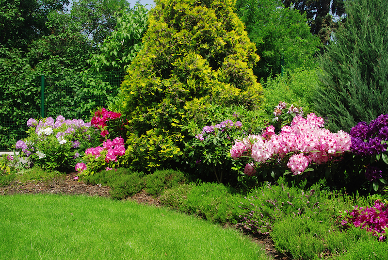 acid loving plants like azaleas and rhododendron