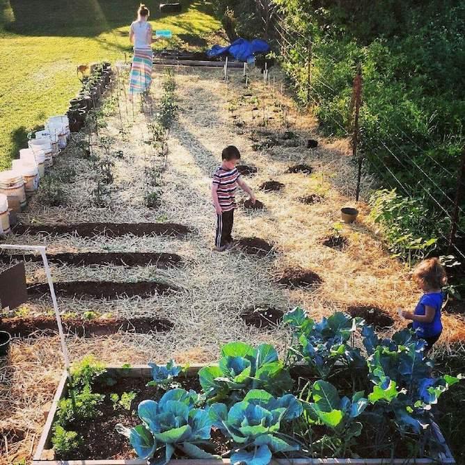 Pepper garden, pepper art