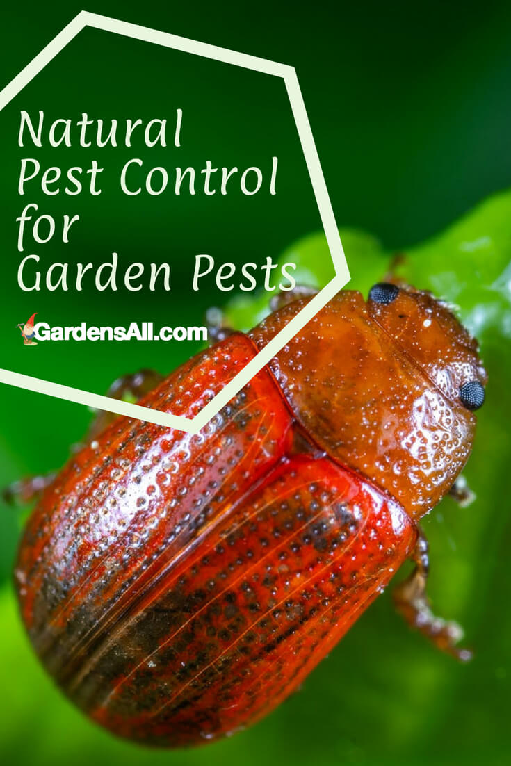 Natural Pest Control For Garden Pests