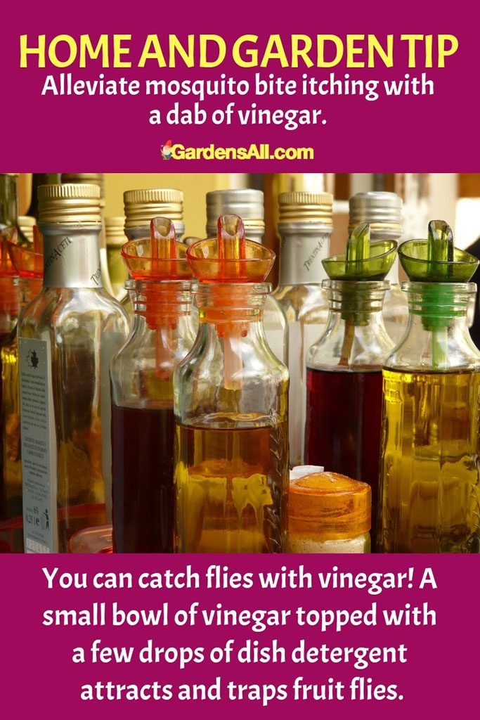 The detergent creates a skim on the top of the vinegar, and the gnat or fruit fly is drawn to it but can't escape and drowns. #Vinegar #VinegarForCleaning #VinegarWeedKiller #AntKiller #Cleaning #AntSprayDIYHomeMade #Disinfectant #WeedKiller