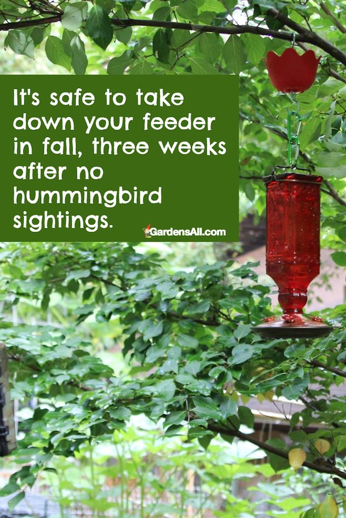 It's safe to take down your feeder in fall, three weeks after no hummingbird sightings. #Hummingbirds #HummingbirdsFood #HummingbirdsFeeders #FoodRecipes #HowToAttract #NaturalGardenPestControl #PestControl