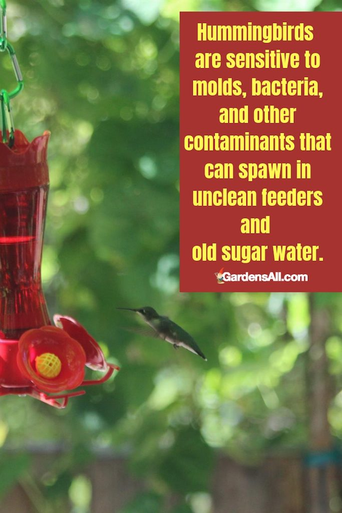 These tiny birds are sensitive to molds, bacteria, and other contaminants that can spawn in unclean feeders and old sugar water. #HummingBirds #Feeder #Drawing #Food #Garden #Attracting #Flowers #Facts #RubyThroated #Craft #Bath #House #Nest #Jewelry #Symbolism #NectarRecipe #Plants #Aesthetic #Rufous #Pink #Blue #Bread #Wings #InFlight #Purple #Geometric
