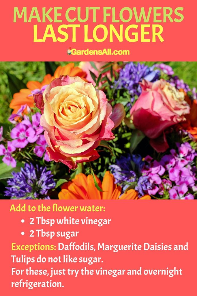 Add two tablespoons each of vinegar and sugar to the water to help the flowers last longer. #Vinegar #VinegarForCleaning #VinegarWeedKiller #AntKiller #Cleaning #AntSprayDIYHomeMade #Disinfectant #WeedKiller