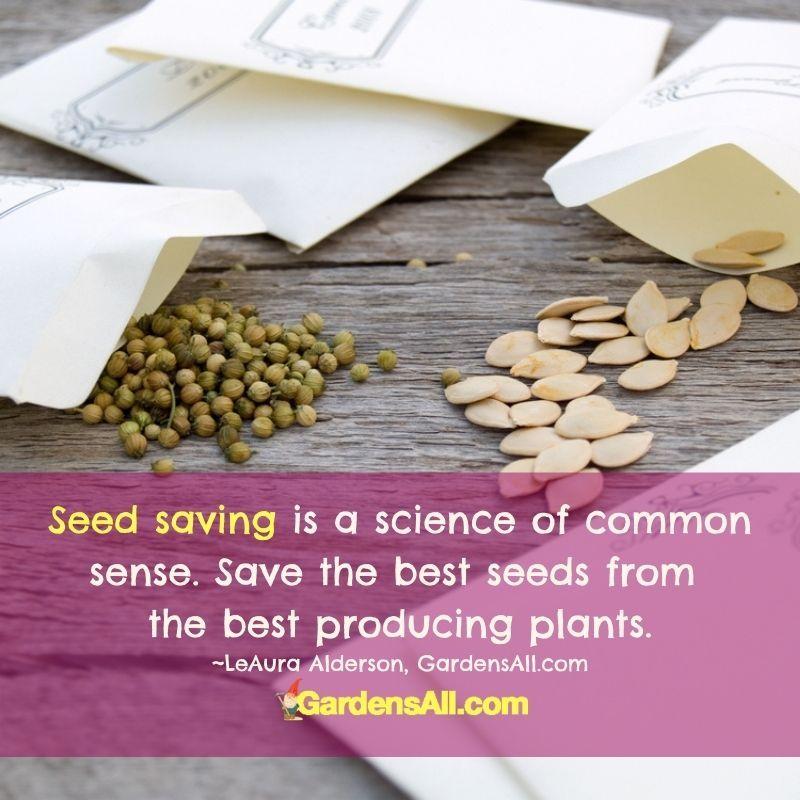 The Art of Seed Saving is Simple. #SeedSaving #HowToSaveSeeds #HeirloomSeeds #GardensAll #SeedStorage #StoringSeeds