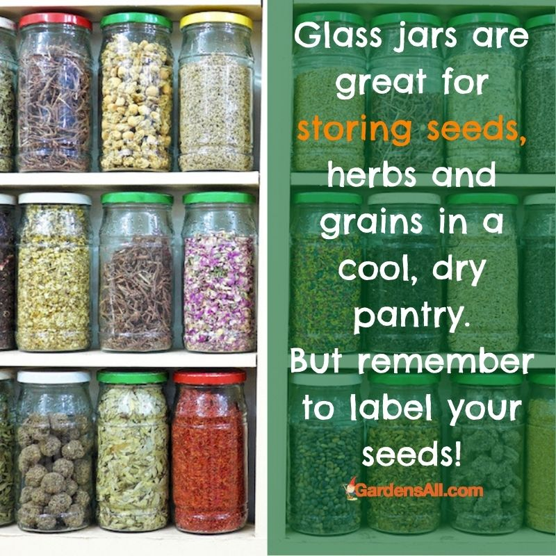 STORING SEEDS FROM YOUR YARD AND GARDEN - Seed storage is a dedicated pastime for many gardeners. Heirloom seeds are a thing that are often passed down for generations, each growing good crops from proven winner seeds. #StoringSeeds #SeedStorage #HowToStoreSeeds #GardensAll #Gardening