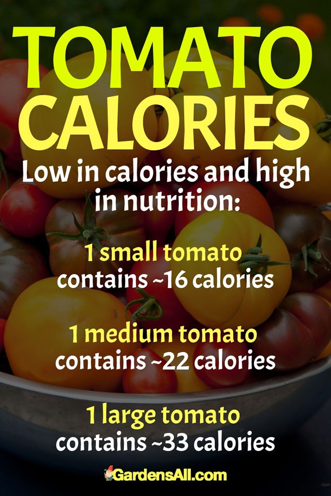So you can enjoy your tomatoes, guilt free. Tomatoes added to foods, also add low calorie fiber and high nutritional benefits. #Tomato #Tomatoes #Gardening #GrowingTomatoes #TomatoNutrition #NutritionForTomato #Vegetables