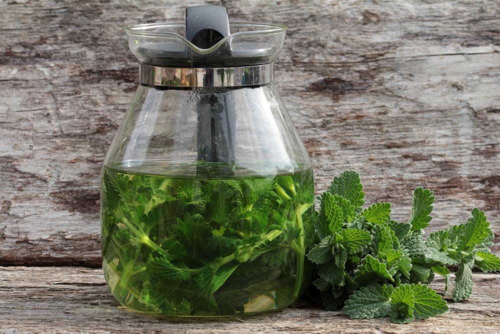 catnip tea- medicinal benefits