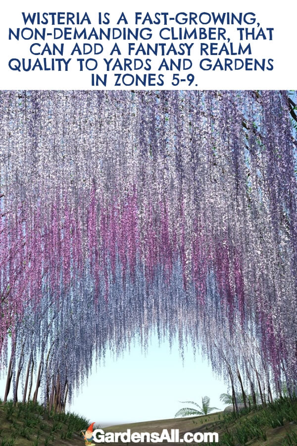Wisteria is a purple climbing plant that arrived in the Eastern United States from the Far East nations of China and Japan in the early 1800s. #flower #flowergarden #Porches #Landscapes #CountryLiving #CurbAppeal #Simple #Perennials #Shade #Ideas #Planters #Small #Entrance #Walkways #ColorCombos #DIY #Spring #Balconies #OrnamentalGrasses #Backyards #Outdoors #Shrubs #Tips #Spaces #Hydrangeas