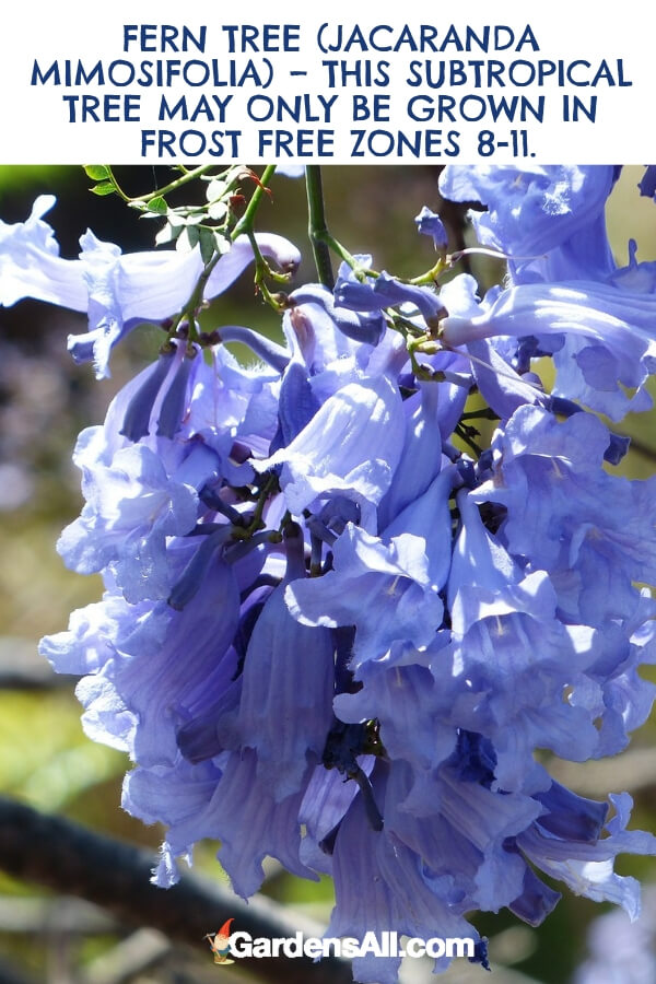 The Ultimate Guide To Purple Flowers Gardensall