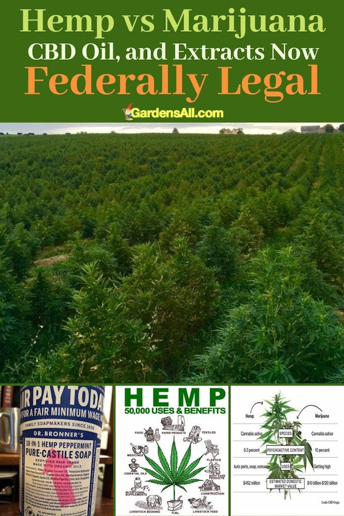 We are on the cusp of a new industrial revolution. Industrial hemp will soon become legal nationwide, which is a very good thing for the future of the economy and ecology of our country. #benefits #cannabis #herbal #healthy #herbs #natural