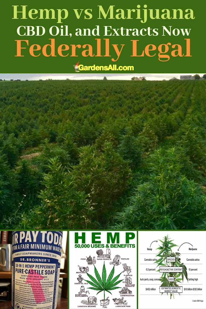 We are on the cusp of a new industrial revolution. Industrial hemp will soon become legal nationwide, which is a very good thing for the future of the economy and ecology of our country. #naturalgardening #gardening #Permaculture #Homestead #Beginner #Backyard #FoodForest #Urban #Farm #Layout #Ideas #Principles #Zones #Landscaping #RaisedBeds #Plants #DIY #ForBeginners #Yard #FruitTrees #HerbSpiral
