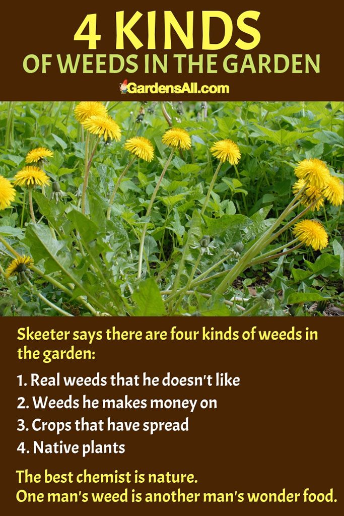 Skeeter says there are four kinds of weeds in the garden. #herbs #indoor #outdoor #garden #forbeginners #box #ideas #containers #Design #Layout #DIY #Medicinal #Potted #Patio #Kitchen #Backyard #Apartment #Raised #Planter #Bed #Balcony #Vertical #Tips