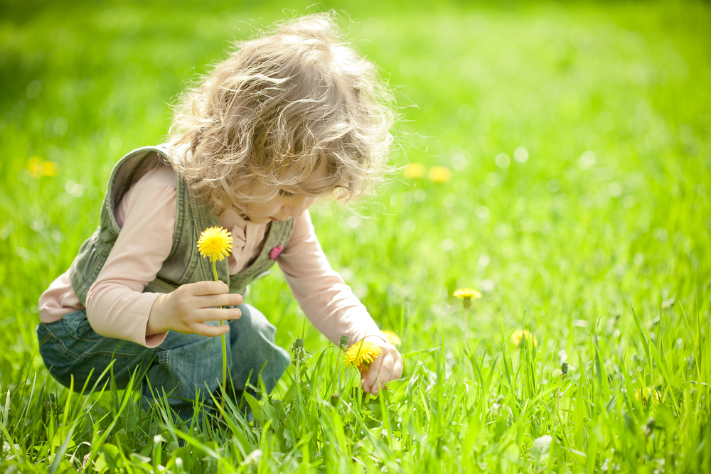 Little girl picking dandelion flowers