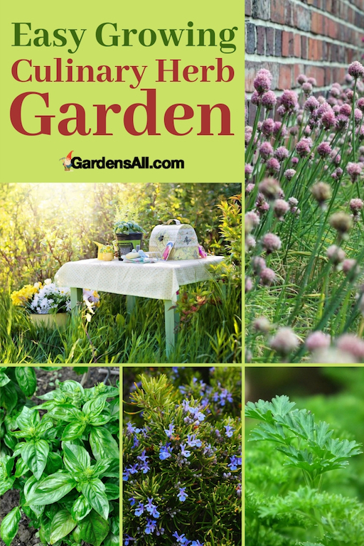 Growing a culinary herb garden is immensely rewarding and doesn't require an especially green thumb. Home cooks, gardeners, and world-class chefs all prize culinary herbs as essential ingredients for the best food in the world. #KitchenGardenIdeas #NaturalMedicine #MedicinalHerbs #MedicinalPlantsAndHerbs #MedicinalHerbsAndTheirUses #ImmuneBooster #Herbs