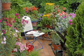 A patio dream garden. Garden sanctuary.