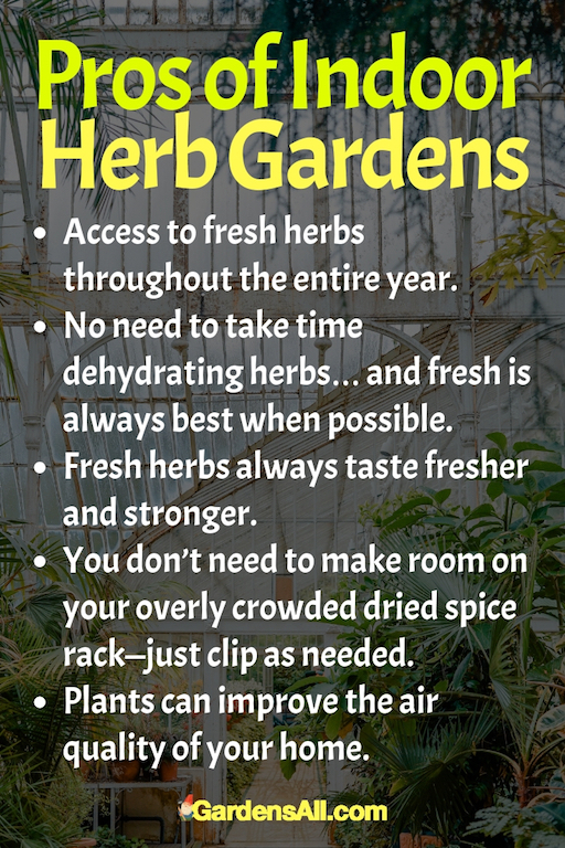 Easy Growing Culinary Herbs for Flavor and Nutrition