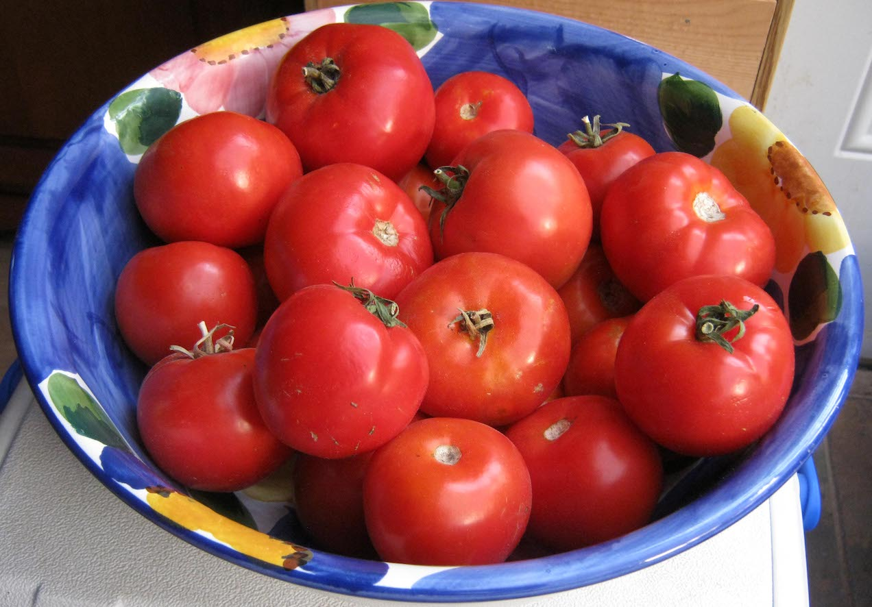 How to grow and pollinate tomatoes