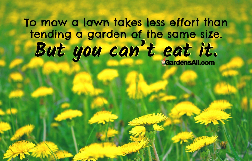 To mow a lawn takes less effort than tending a garden of the same size. But you can't eat it. #Dandelion #DandelionGreens #DandelionBenefits #BenefitsOfDandelionTea #DandelionBenefitsTea #DandelionTea #DandelionForTea #DandelionTeaBenefits #Plant #Flowe#Nature #Yards #Herbs#HealthBenefits #Perennials #Recipe #Remedies #NaturalRemedies #DandelionTea #Tea #Food #Vegans #Garden #Gardening #Growing #Landscaping #Wine #Greens #Videos