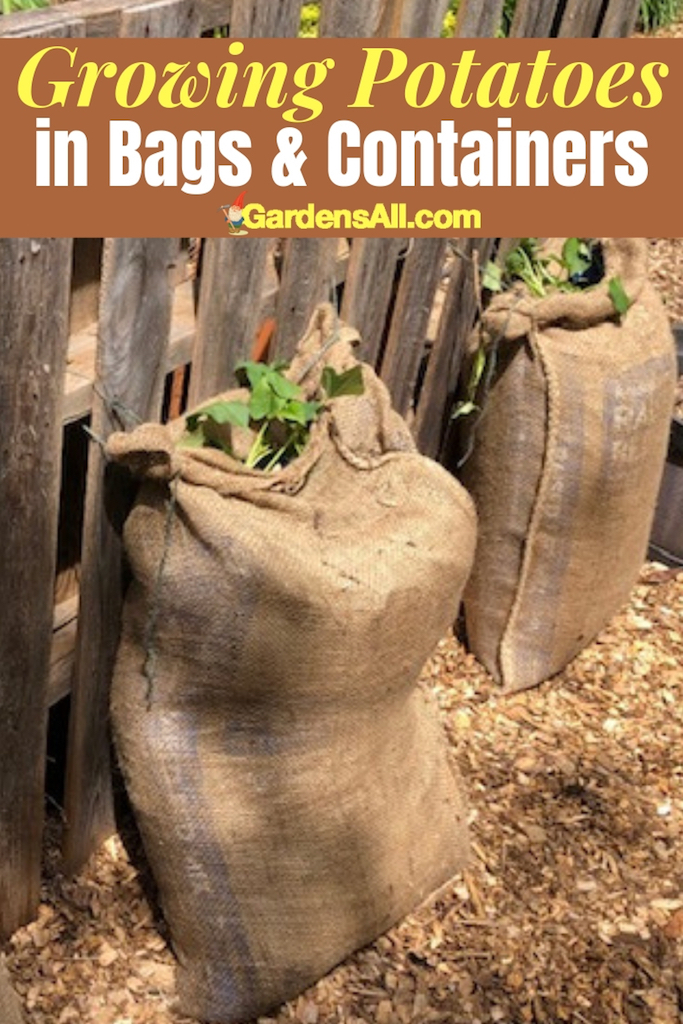 Growing potatoes can occupy a lot of space for a long time. So if you're looking for alternatives that keep potatoes from hogging precious garden space while keeping them easier to harvest, you'll enjoy these ideas. #HowToGrowPotatoes #GrowingPotatoes #ContainerGardening #Potatoes #Vegetables #Veggies #RaisedBeds #BurlapBags