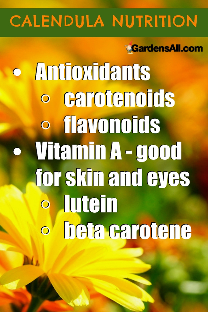 The benefits of calendula are many. Calendula officinalis, is a perky little flower from a very worthy family of plants. Related to—and sometimes confused with—Marigold (Tagetes), they're both little cousins of the Sunflower family (Asteraceae or Compositae). #Calendula #CalendulaOil #MedicinalHerbs #MedicinalHerbsAndTheirUses #Medicinal #SalveBenefits #ForEczema #ForSkin