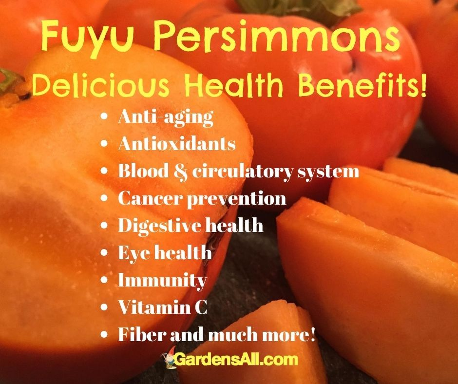 Fuyu Persimmons, delicious, nutritious and hardy!  #FuyuPersimmons #AnticancerFoods #FuyuPersimmonHealthBenefits #AntiagingFoods #Antioxidants #Immunity #FoodsHighinVitaminC #GardensAll
