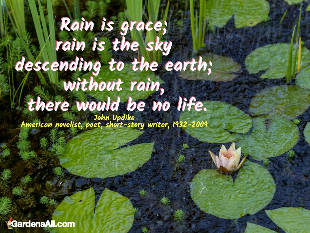 """""""Rain is grace; rain is the sky descending to the earth; without rain, there would be no life."""" ~John Updike, American novelist, poet, short-story writer, 1932-2009 #DIY #WithoutGutters #System #IdeasBeautiful #Ideas #Decorative #Stand #Pretty #Garden #Painting #Planter #Attractive #Modern #Diverter #Disguise #Designs #Overflow #Small #Landscaping #RainwaterHarvesting #Benefits #FrontOfHouse #Irrigation #Galvanized #HowToBuildA #Chain #Decoration #Rustic"""