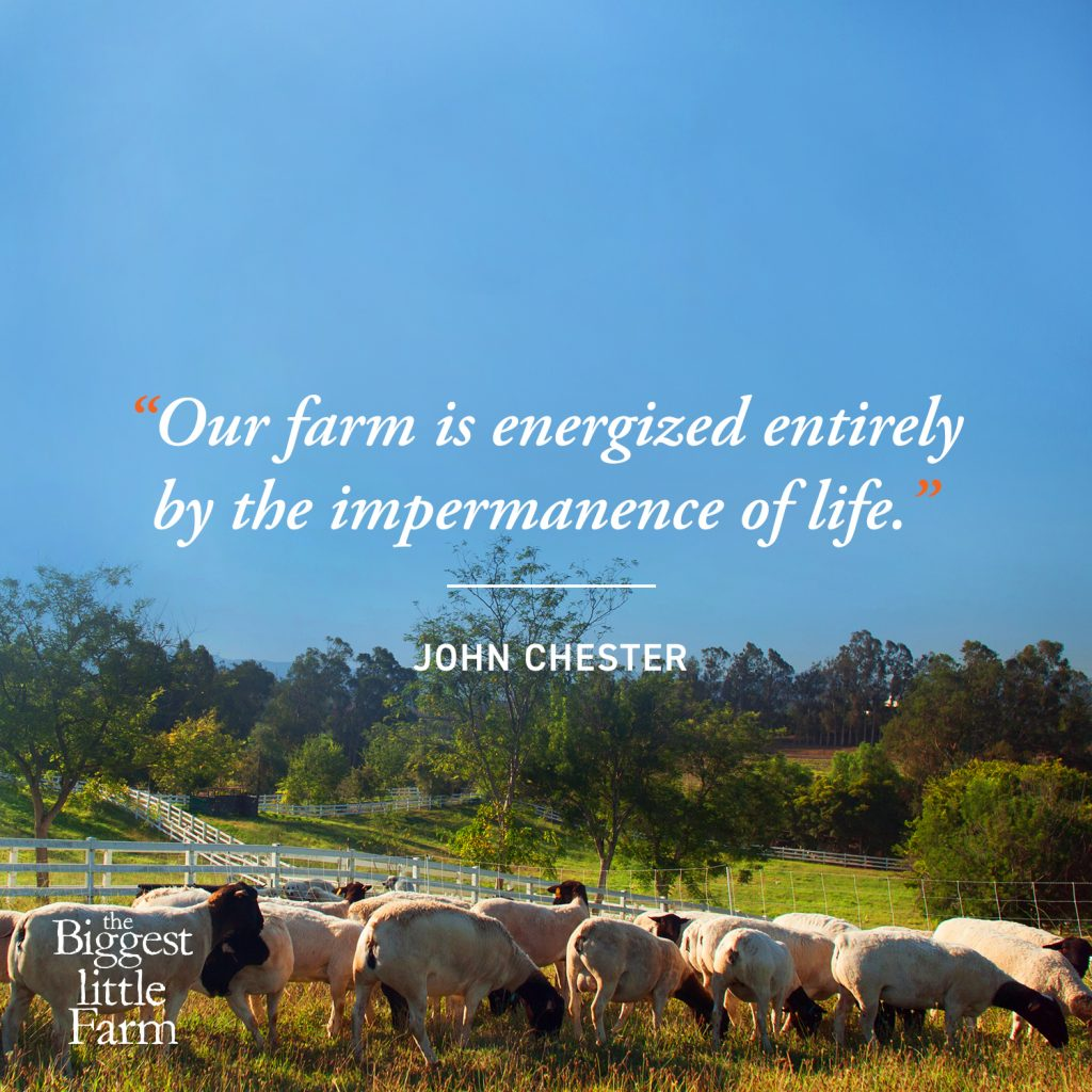 Our farm is energized entirely by the impermanence of life. #permaculture #farm #layout #design #ideas #landscapes #diy #howtobuild #architecture #urban #sutainabledesign #greenhouse #plants #gardening #plan #compost #homesteads #beds #backyards #howtomake #frontyards #beginner #principles #projects #tips #living #farming #orchard #community #article