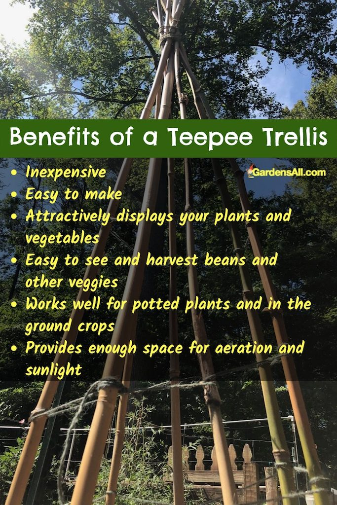 Teepees offer great support for all kinds of growing needs. We're using them for vining, pole and bush beans. #teepee #bamboo #bean #trellis #pole #frame #howtobuild #diy #garden #green #ideas #runner #bush #raisedbed #fence #climbing #veggiegardens #smallspaces #arch #easy #chickenwire #growing #planting #howtogrow #inpot #wire #vines #vegetables #indoor #videos