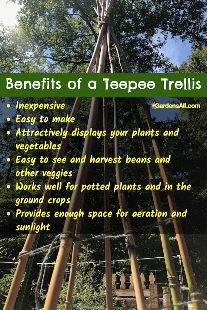Bamboo Bean Teepee Trellis Video How To Gardensall