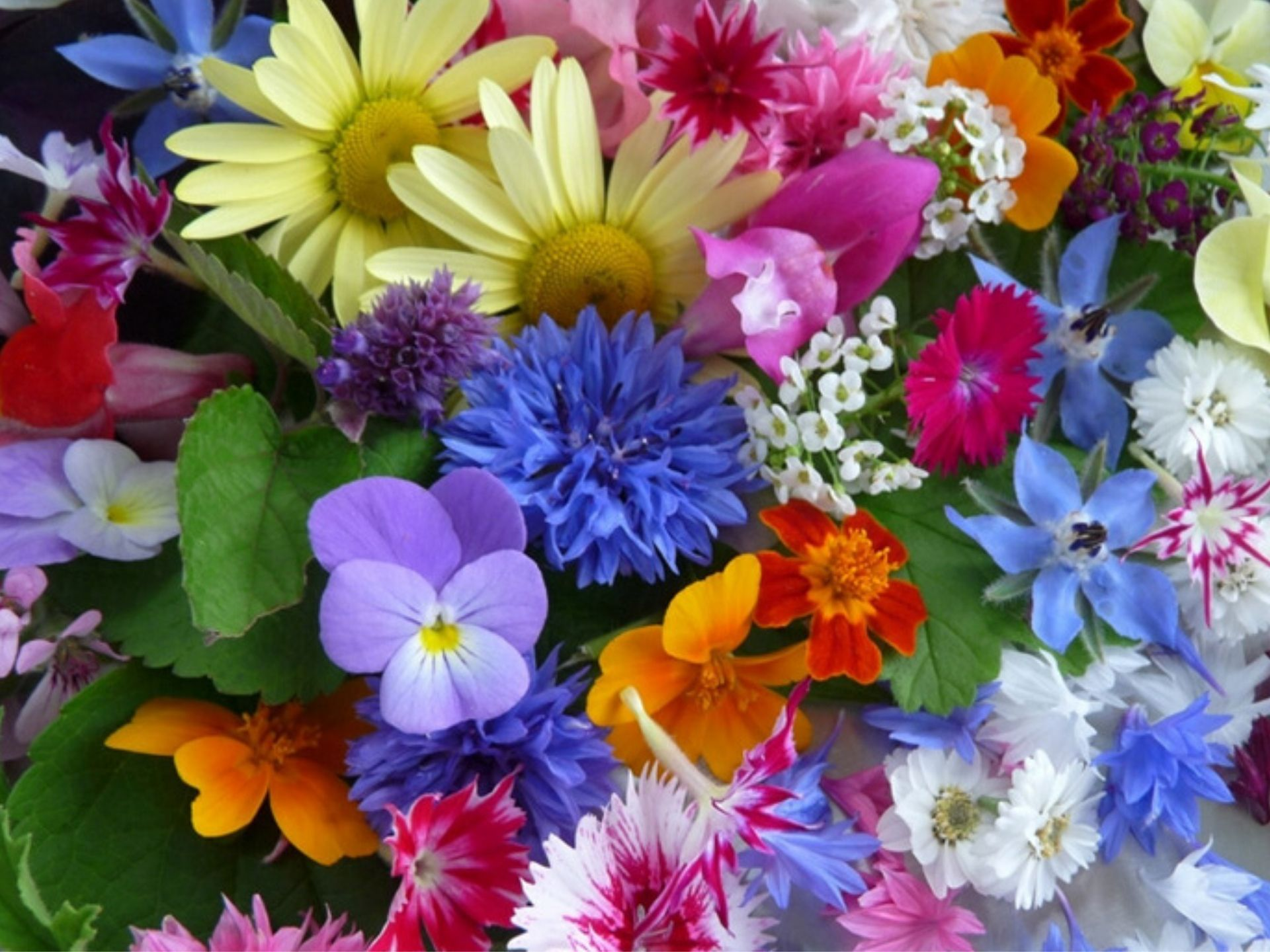 If you're looking for an edible flowers list, we've got one for you. If edible flowers sounds weird to you, you're not alone.