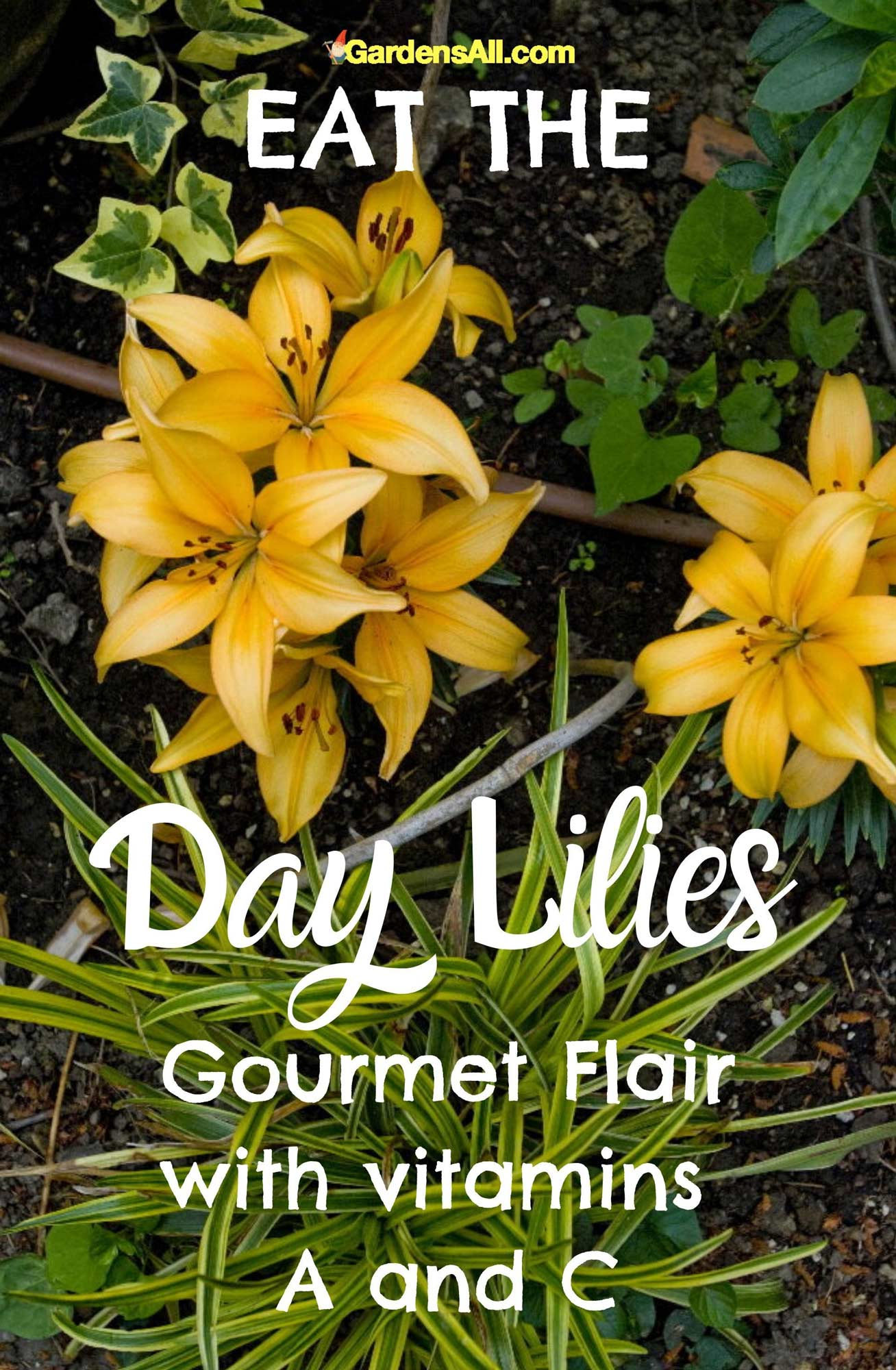 Daylily - How to use: In Asian cuisine, salads, desserts, deep-fried, or sautéed with garlic and asparagus. #EdibleFlowers #AreFlowersEdible #Flowers #HealthBenefits #Daylily #Edible #Garden