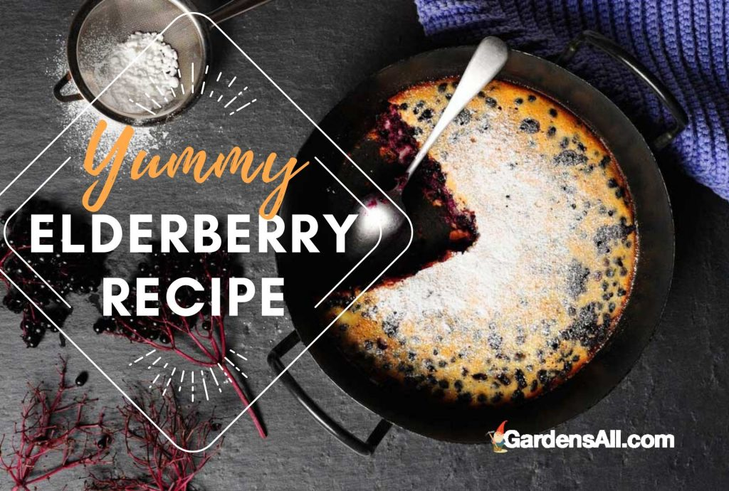 Here's a recipe using elderberries! Try this yummy Elderberry Pie recipe! #Elderberry #ElderBerries #HealthyFood #HealthyFoodRecipes #Baked #Recipes