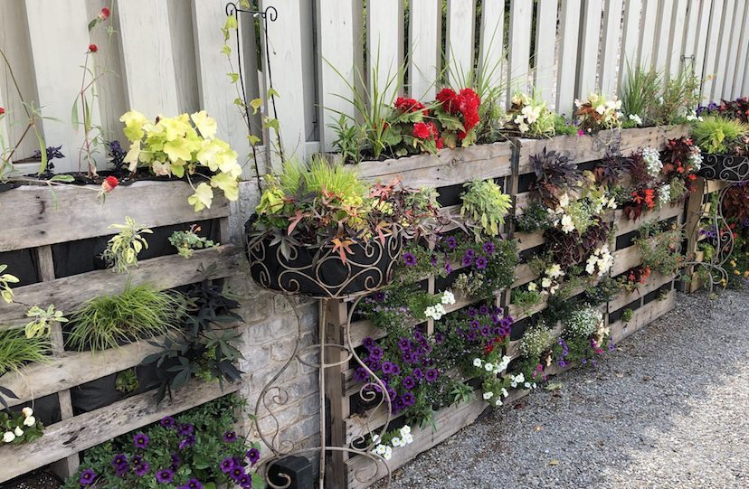 Vertical gardening with pallets. #PalletGarden #GrowingInPallets #VerticalGardeningIdeas