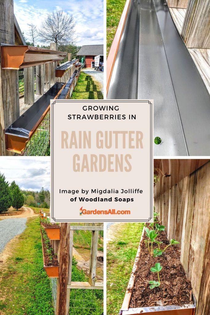 AN ATTRACTIVE RAIN GUTTER GARDEN FOR GROWING STRAWBERRIES:Strawberries grow well in rain gutter gardens. You just need to keep them well watered. #Rain-gutter-garden #VerticalGardening #VerticalPlanters #RaingutterPlanters