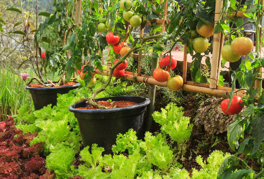 Vertical Vegetable Garden Ideas That Save Space