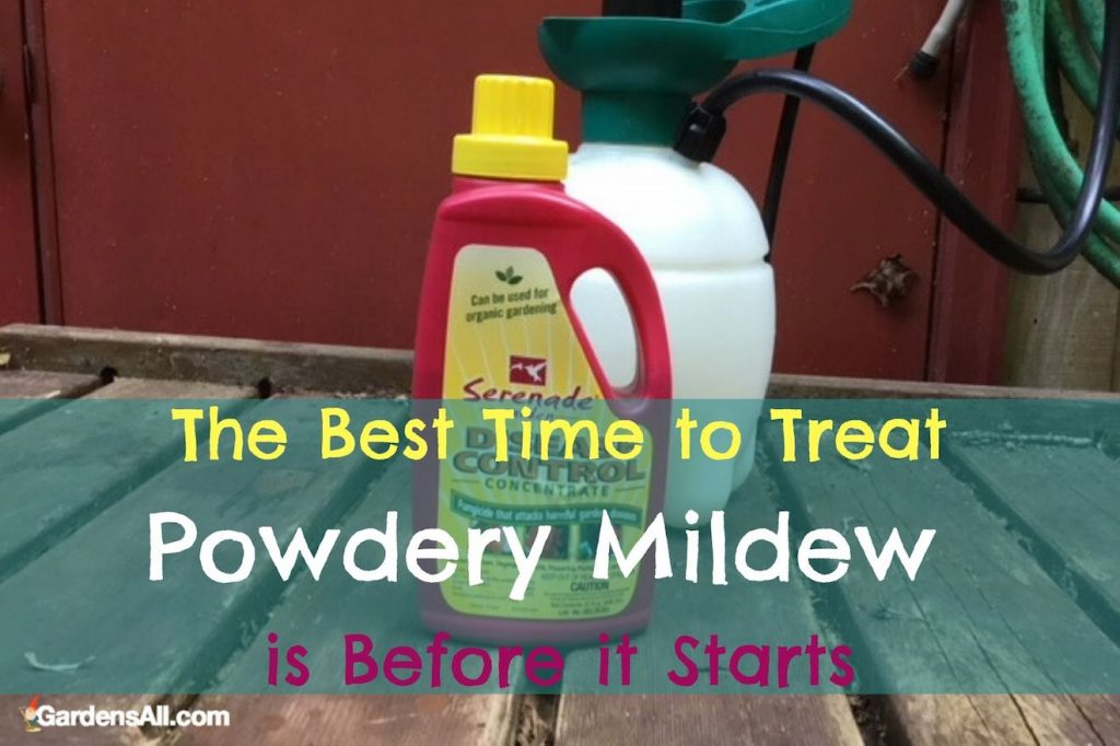 The Best Time to Treat Powdery Mildew is before it starts! Natural Treatment for it.#HowToGetRidOfPowderyMildew #PowderyMildewTreatment #TreatmentForPowderyMildew #WhitePowderOnPlants #NaturalFungicide #WhiteFungus