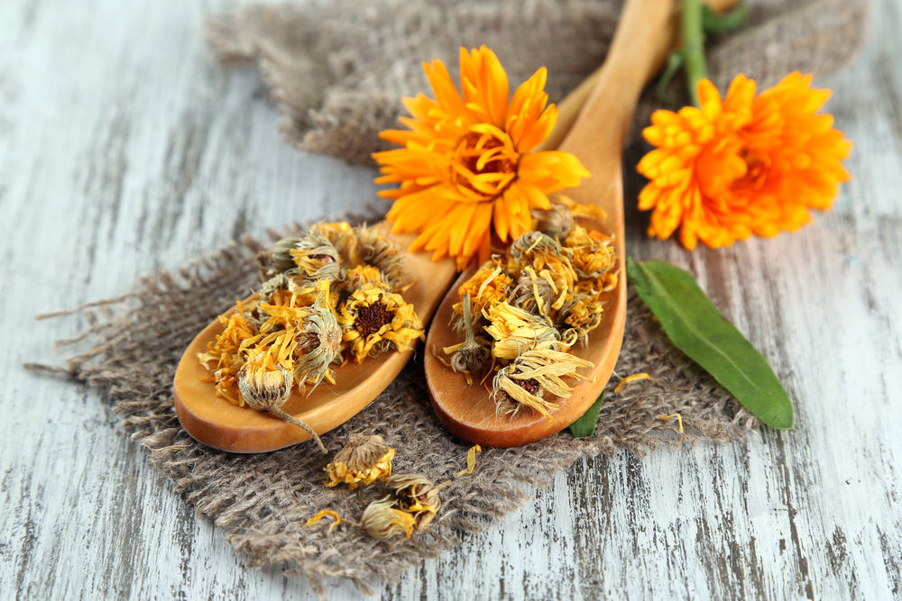 ANTIFUNGAL HERBS and NATURAL REMEDIES for CANDIDA include calendula flowers and more. #AntifungalHerbs #NaturalRemedies #Calendula