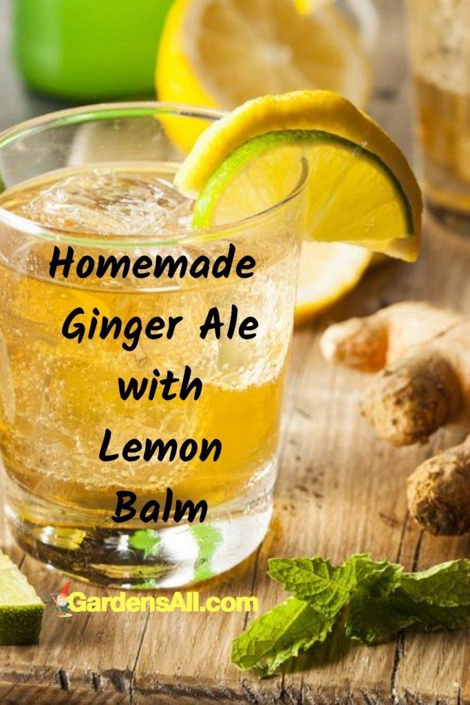Homemade ginger ale with lemon balm - a treat with benefits! #GrowingLemonBalm #MintPlant #LemonBalmBenefits #LemonBalmUses #LemonBalmMedicinal #BeneficialHerbs #HomemadeLemonade