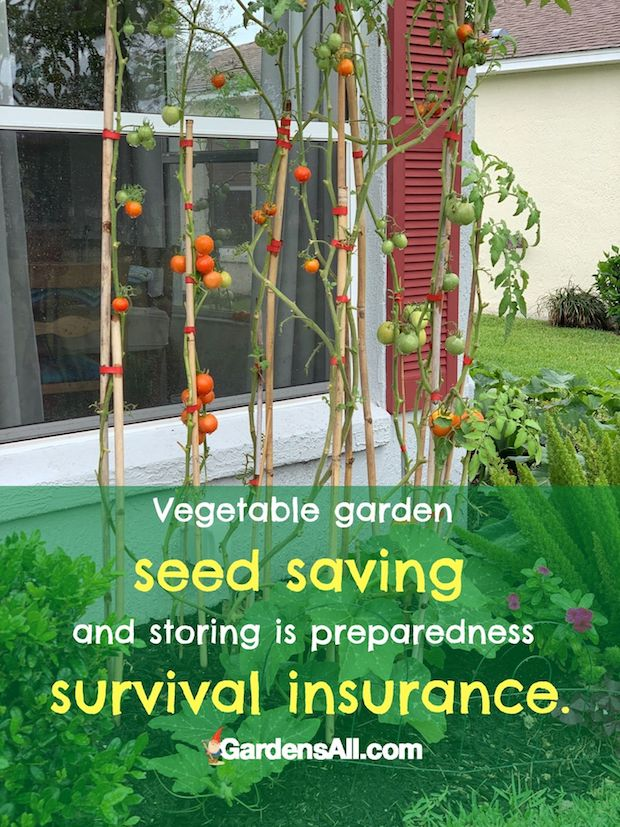 SEED SAVING AND STORING is an important hedge against dire times. #SeedStoring #SeedStorage #SeedSaving #Survival #Preparedness #Gardening #GardensAll.com