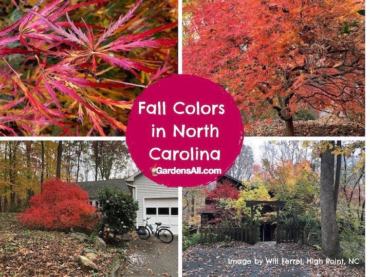 Fall Colors in North Carolina - Peak Colors late October to mid November #FallColorsInNorthCarolina #FallColorsNC #AutumnImages #GardensAll