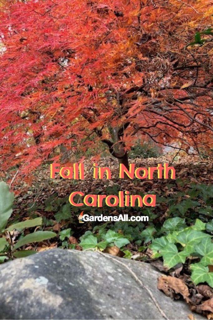 Fall colors in North Carolina #FallColorsInNorthCarolina #FallColorsNC#AutumnImages