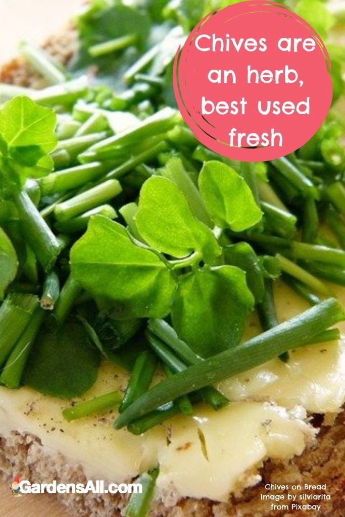 WHEN SHOULD YOU USE CHIVES VS. GREEN ONIONS?Use finely-chopped leaves or longer fragments to garnish eggs, soups, fish, avocado toast, and stir-fries. Mix them into dips, spreads, and salads for a milder flavor. And of course, use them to top baked potatoes along with sour cream or butter. #Chives #ChivesVsGreenOnions #HowToUseChives #ChivesVsScallions #WhenToUseChives #ChivesUses #ChiveHerb #GardensAll