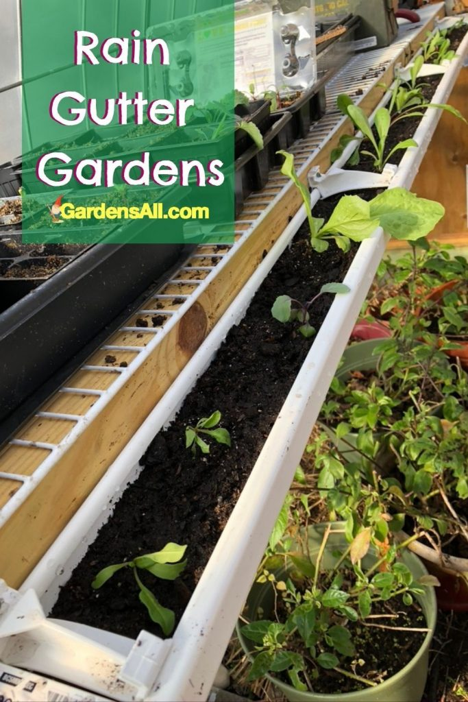 RAIN GUTTER GARDENS - Especially helpful vertical gardening for accessibility or when space is limited.#GardensAll #GutterGarden #RainGutterGardens #VerticalGarden #GrowingVertically #GreenhouseGrowing #GardeningInSmallSpaces