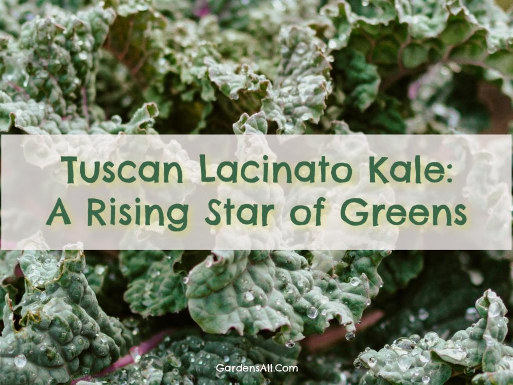 tuscan lacinato kale