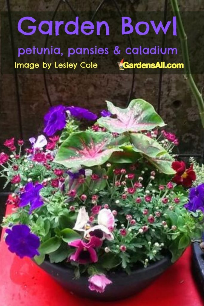Garden Bowls are fun, beautiful and make great gifts. This flower bowl arrangement includes petunias, pansies, and caladium. Image by Lesley Cole, featured on GardensAll.com