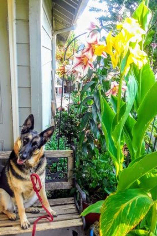 Jet and Lesley Cole garden balcony GardensAll.com