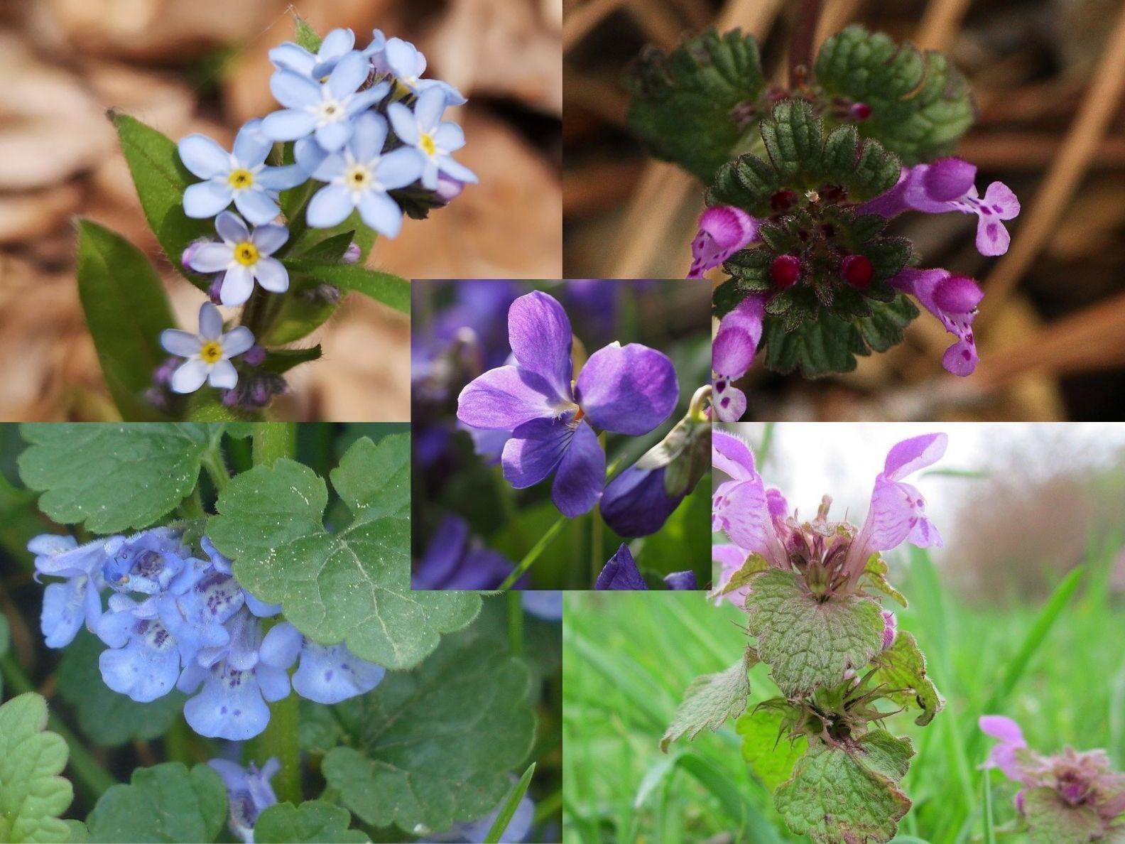 Weeds With Purple Flowers-GardensAll.com